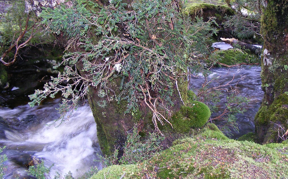 creek at Enchanted Forest,  Cradle Mt, Tasmania by gaylene