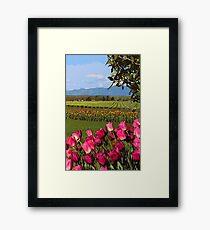 Skagit Valley, Tulip fields Framed Print