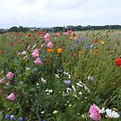 Meadow flowers by Heather Thorsen