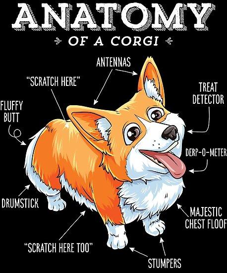 Pósters «Camiseta de anatomía de un Corgi Camiseta de Puppy de perro ...
