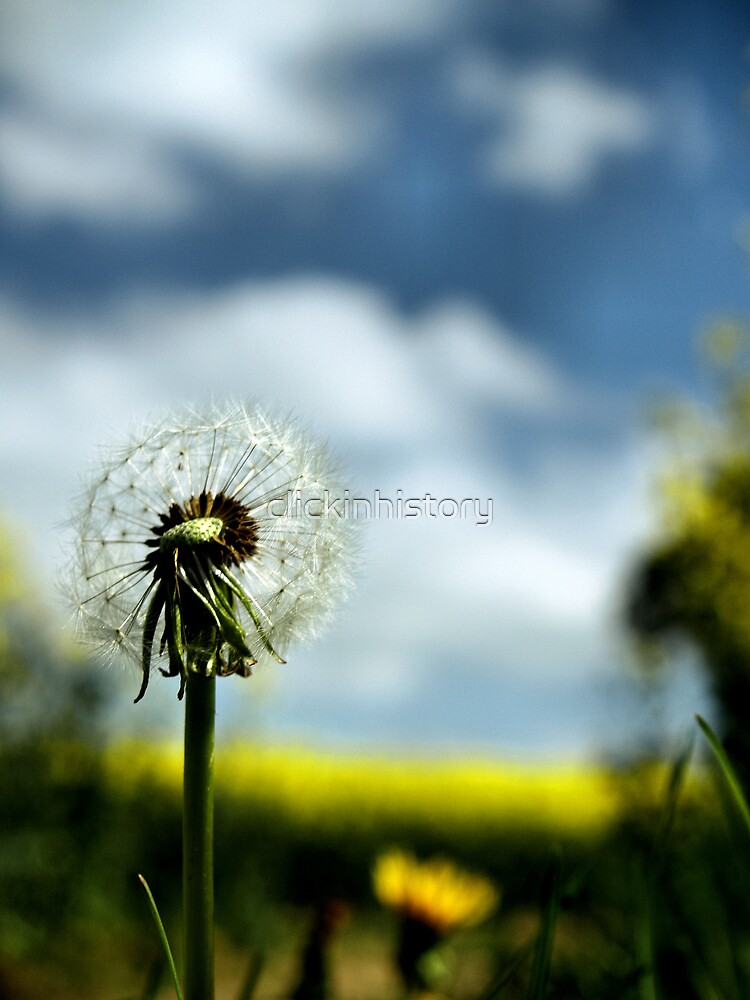 May flower 10 by clickinhistory