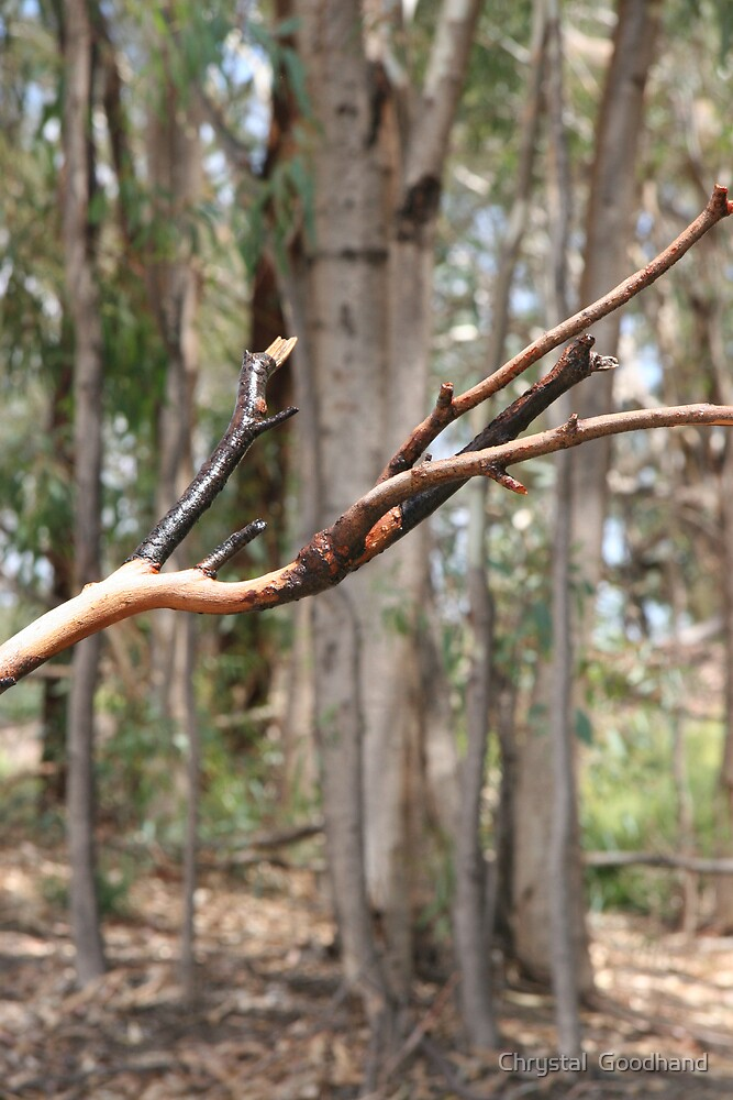 Mallee Branch by Chrystal  Goodhand
