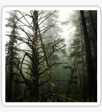 Fog Trees. Sticker
