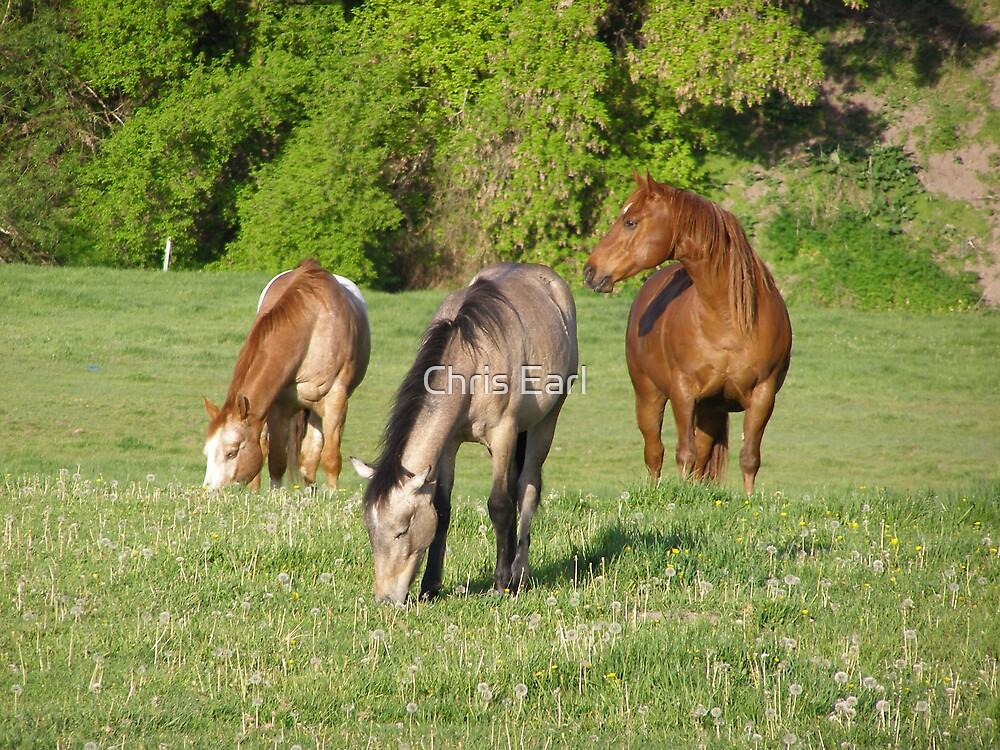 Horse Trio by Chris Earl