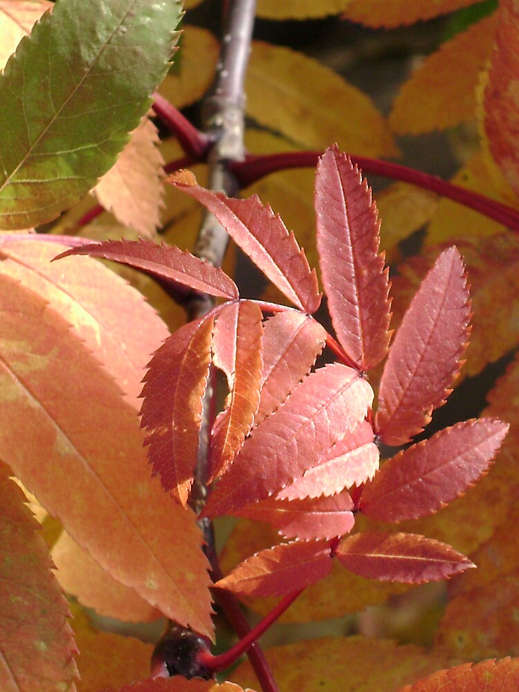 Fall Colors by JAMES ANDREW BANNERMAN
