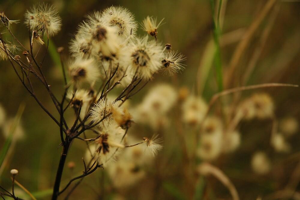 Autumn Flower by Cammi
