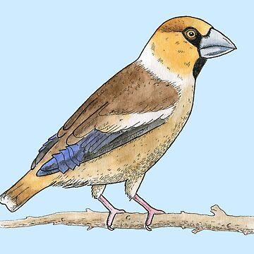 Hawfinch by srclark