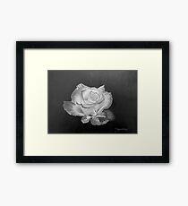 Rose in Graphite Pencil Framed Print