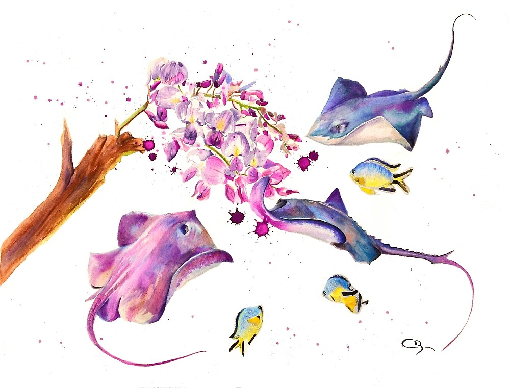 « Aquarelle de raies  » par cindybarillet