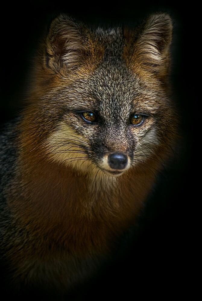 Fox Power by Cheri  McEachin