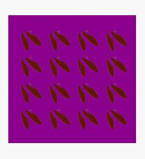 Brown beans on purple Photographic Print