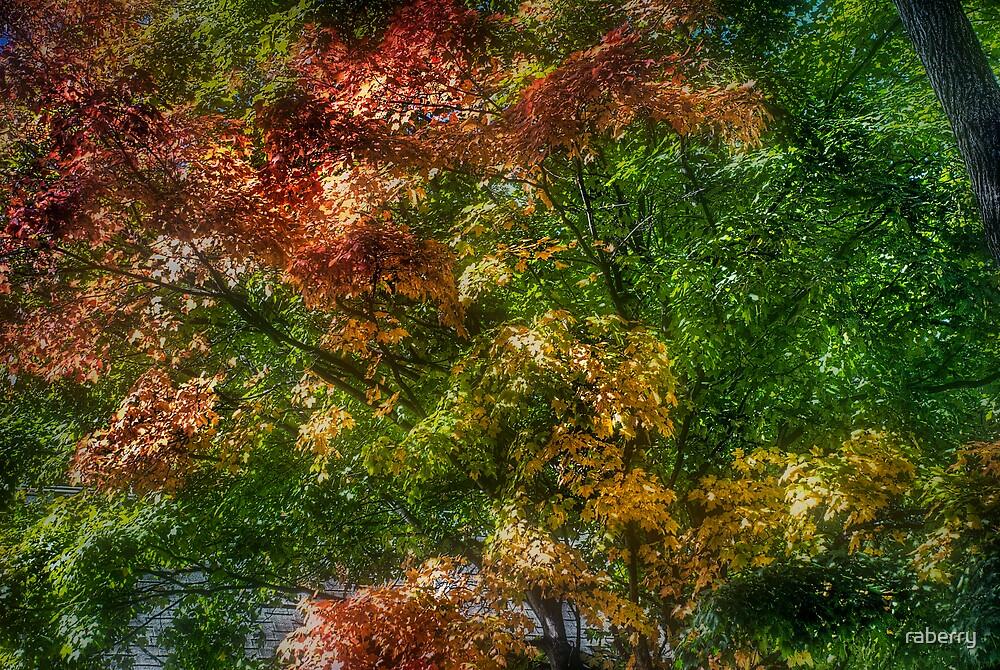 Fall Foliage.. by raberry