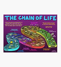 The Chain of Life - Your Evolutionary History Photographic Print