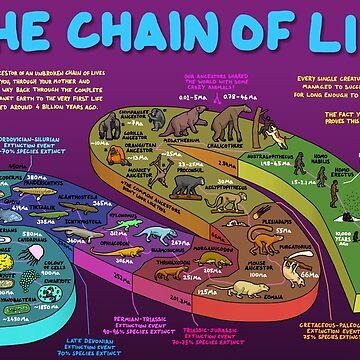 Die Lebenskette - Ihre evolutionäre Geschichte von DominicWalliman
