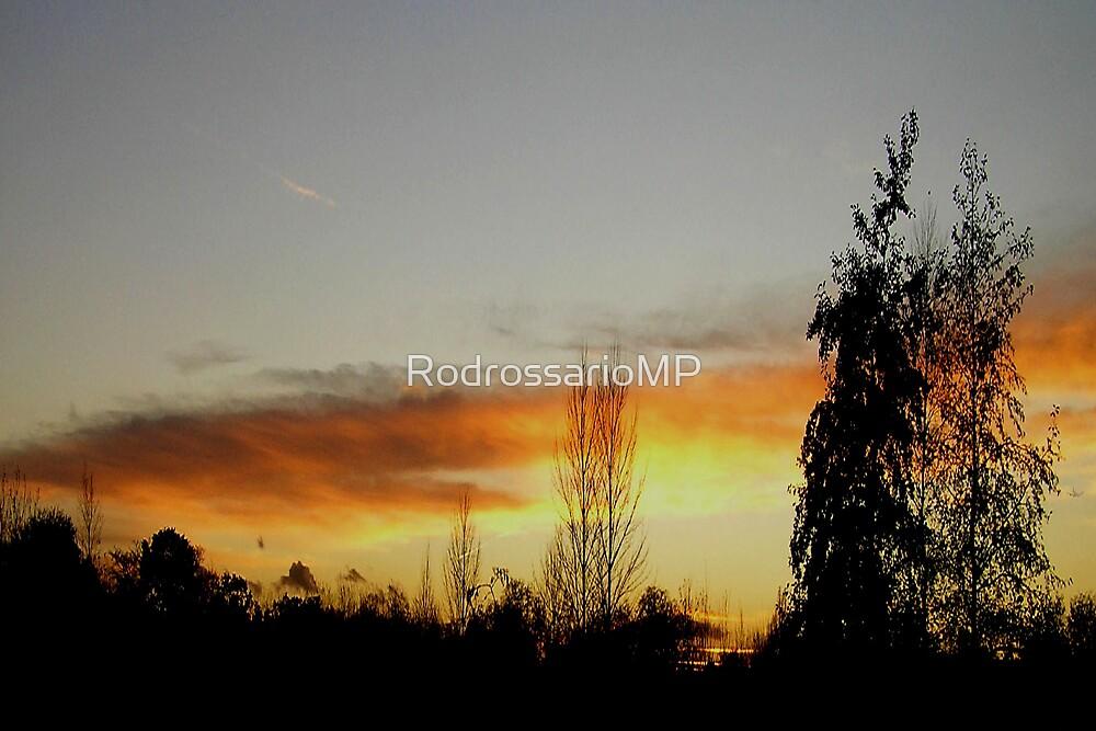 Woodland  Sunset by RodrossarioMP