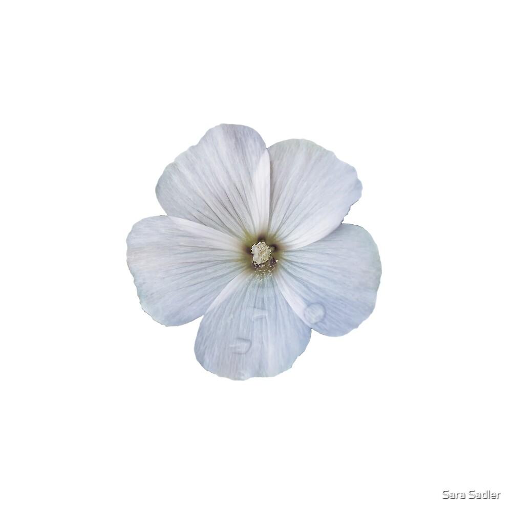 White hibiscus flower by Sara Sadler