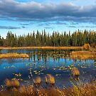 On Blue Pond by Bob Hortman
