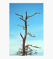 Ibises On Bare Tree  Photographic Print