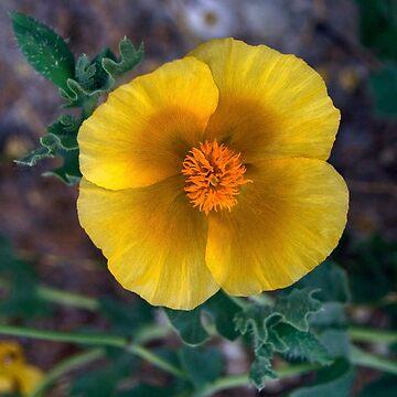 yellow poppy by 3dgartstudio