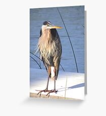 Kyle, the Great Blue Heron Greeting Card