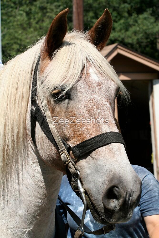 horse #2 by ZeeZeeshots