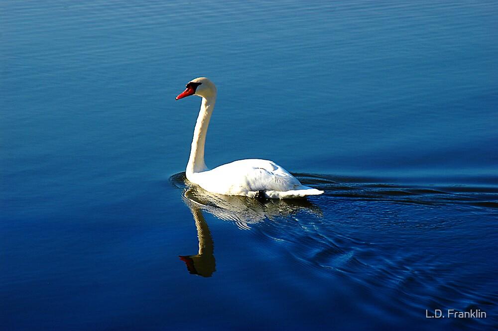 Gliding Swan by L.D. Franklin