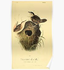 James Audubon Vector Rebuild - The Birds of America - From Drawings Made in the United States and Their Territories V 1-7 1840 - Short Billed Marsh Wren Poster