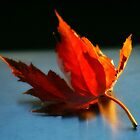 Autumn is a second spring when every leaf is a flower. by autumnwind