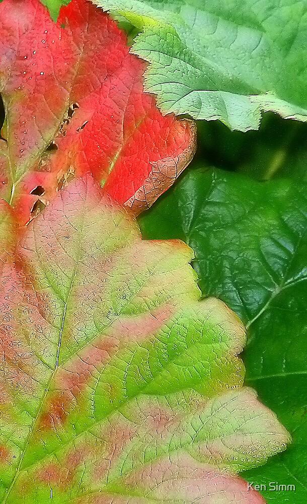 Leaves by Kenart