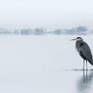 Quiet Serenity by Paul Tupman