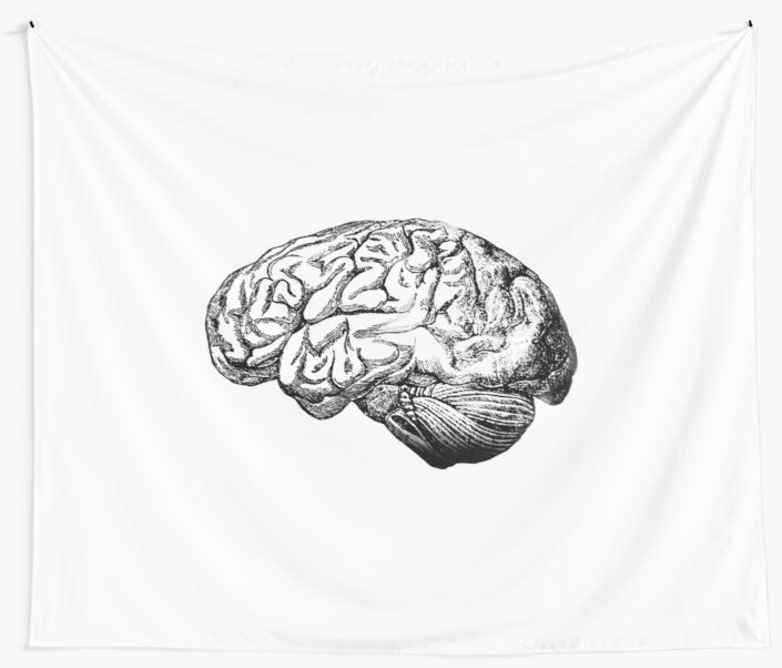 Brain Anatomy Wall Tapestries By Stilleskygger