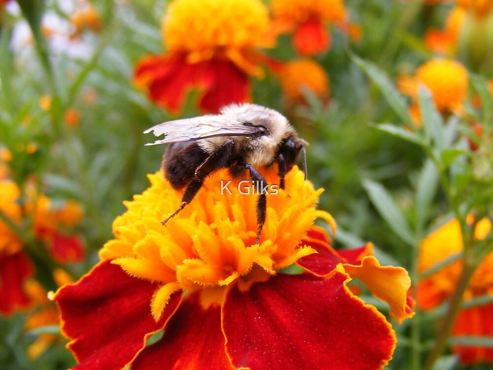 Bee utiful by K Gilks