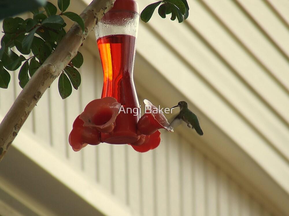 The Beauty Of A Hummingbird by Angi Baker
