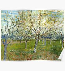 "Van Gogh ""Orchard with Blossoming Apricot Trees"" 1888 Poster"