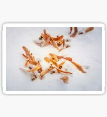 Beautiful golden leaves in the snow postcard Sticker