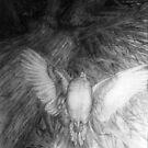 Dove by Nestor