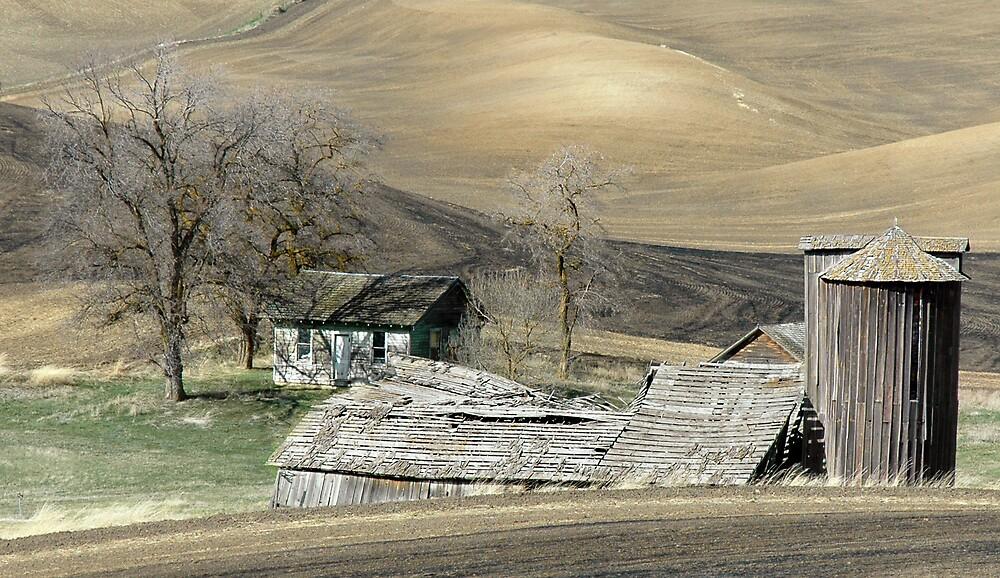 Autumn Splendor by dougf
