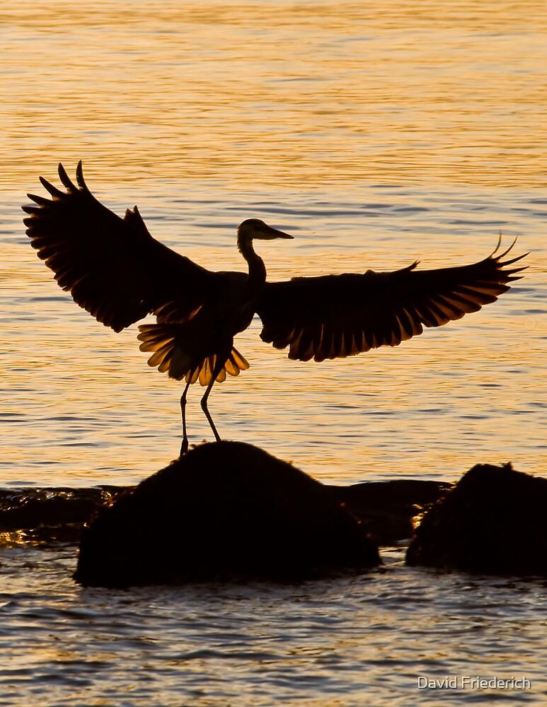 Heron In Dawn Light by David Friederich