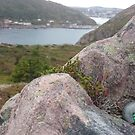 St. John's, Newfoundland by kennedywesley