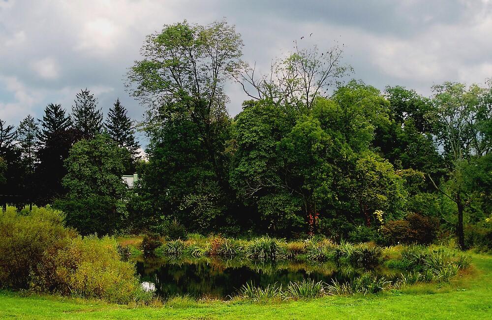 Fall Pond by Judi Taylor