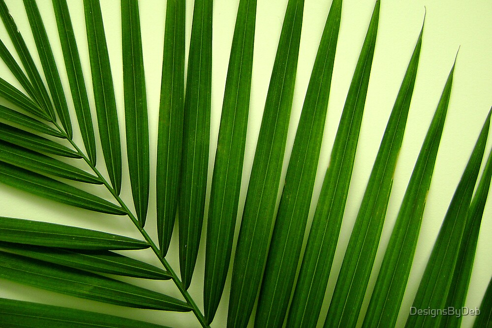Palm Frond by DesignsByDeb