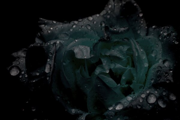 Plastic Flower by Godfrey Blackwood