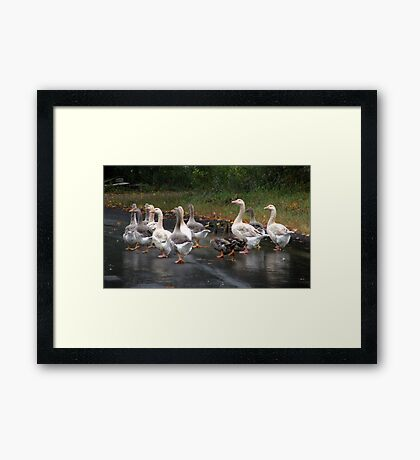 Let's Get the Flock Out of Here! Framed Print
