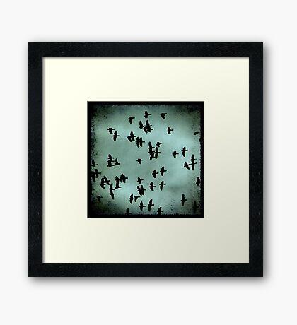 Black Birds Framed Print