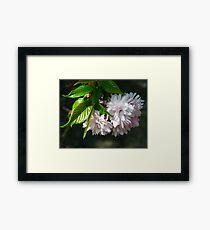 Cherry cherry. Framed Print
