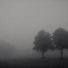 Delicate Dawn by Alan Watt