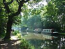 Summer on the River Wey Navigation, Wisley, Surrey, U.K. by Colin  Williams Photography