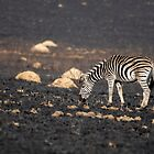 Stripes on Black by Shaun Colin Bell