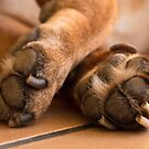 Old paws 01 by kevin chippindall