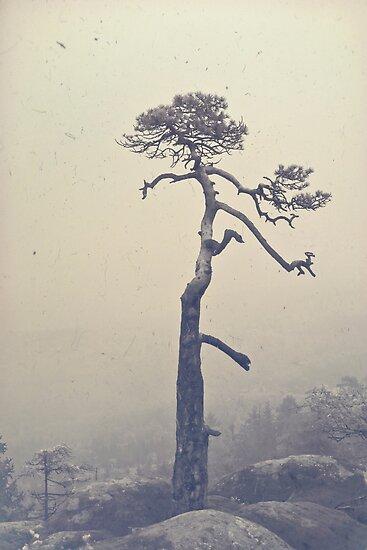 A single tree by Dominika Aniola